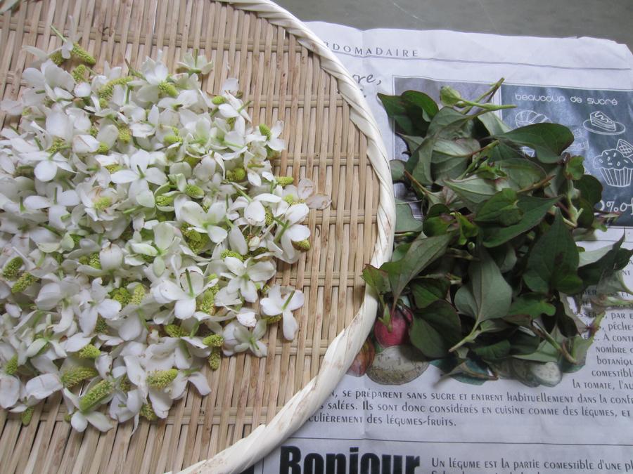 庭でドクダミの花を摘んできました