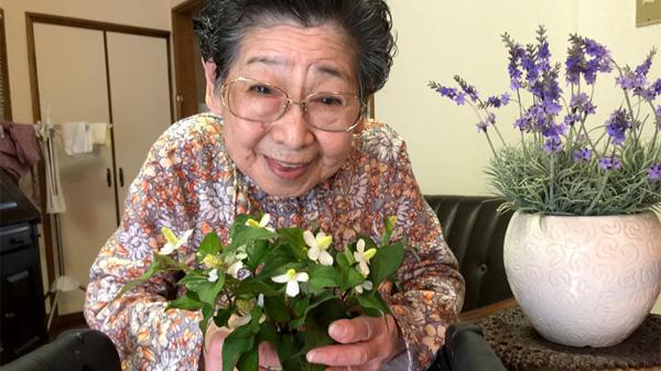 義母おススメ!ドクダミの花でできる自家製虫刺され薬をつくってみた!