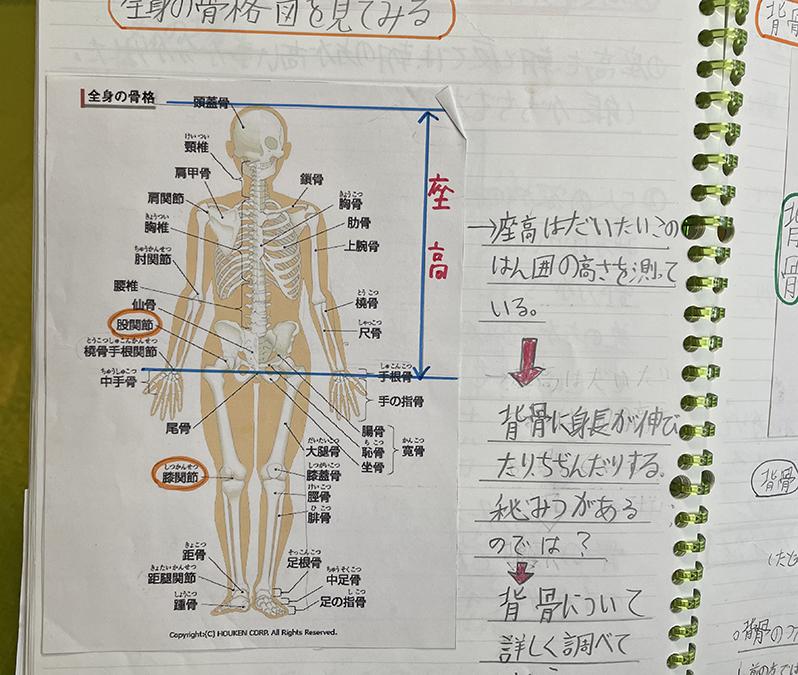 全身骨格や背骨の仕組みを調べてみた。